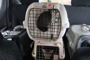 Pet Taxi Taiping